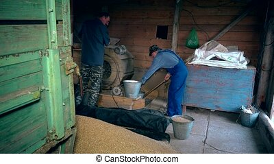 Agriculture summer end works. Men sifting grain with retro machine in barn
