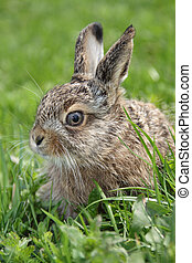 little hare - Small little hare sitting in the green grass