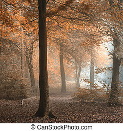 Stunning colorful moody vibrant Autumn Fall foggy forest landscape