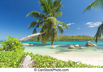 Anse Boudin - Beautiful beach Anse Boudin seen from under...