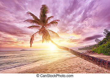 Barbados - Beautiful sunset over the sea with a view at a...