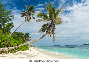 Anse Petite - Beautiful palm tree over the beach Anse...