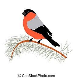 Bullfinch on the fir branch. Winter or christmas vector illustration