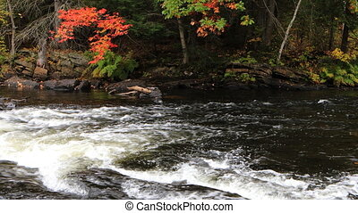 Rapids in Algonquin in fall - A Rapids in Algonquin in fall