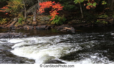 Rapids in Algonquin in autumn - A Rapids in Algonquin in...