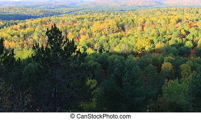 Algonquin forest in the fall - An Algonquin forest in the...