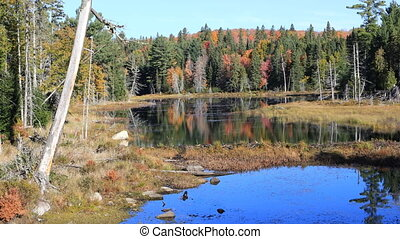Scene from Algonquin in autumn - A Scene from Algonquin in...