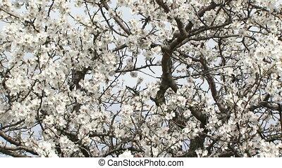 Woman climbed up a tree