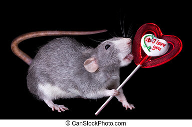 Rat Licking Lolipop - A rat is holding a valentine lolipop...