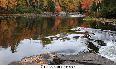 River rapids in Algonquin in autumn - A River rapids in...
