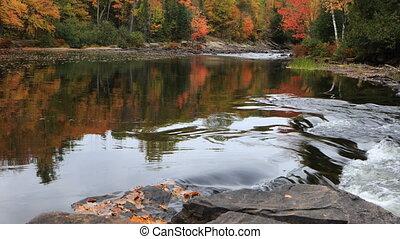 River rapids in Algonquin in autumn - A River rapids in...