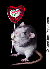 Valentine Rat - A rat is holding a valentine lolipop that...