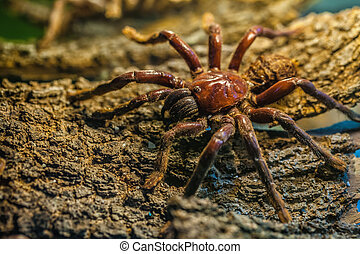 Tarantula - Close-up of a terrible poisonous spider on tree...