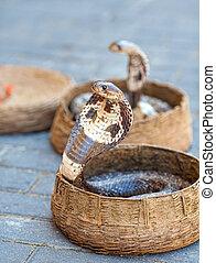 cobras, cestas