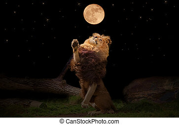 Lion - A lion reaching for the moon
