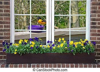 Baltimore oriole in window - Baltimore oriole on purple dish...