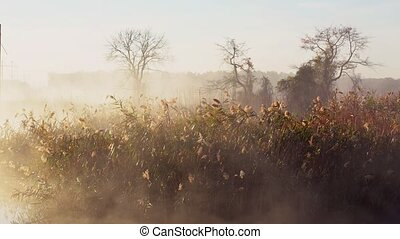 Fog with sun light at frosty morning on the river
