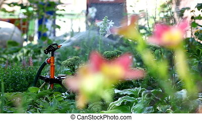 sprinkler in garden pour flower