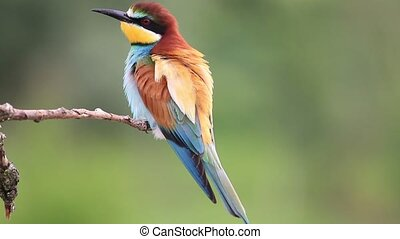 bright colorful bird sits on a dry branch