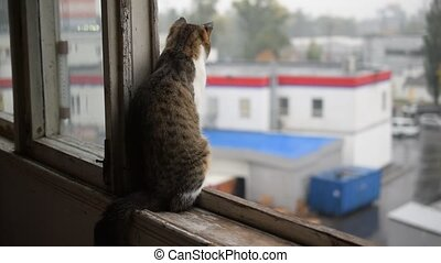Cat on window sill experiencing rain - Grey and white cat on...