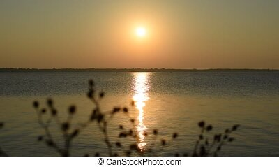 Sunset over lake or river with plant silhouette