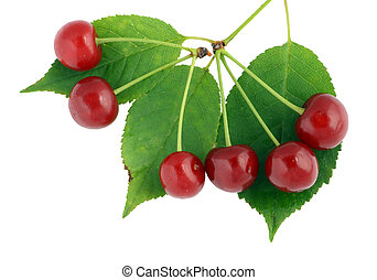 Cherry leaves and berries - Real cherry leaves and berries...