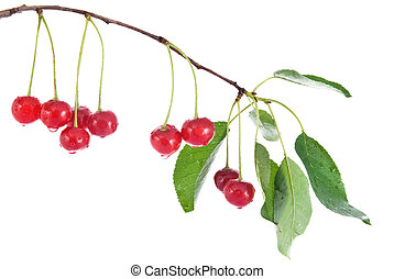 red cherry with leaves and water drops isolated on white