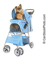 pushchair for chihuahua in front of white background