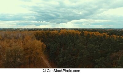 Aerial drone shot over the autumn european forest. Shot in...
