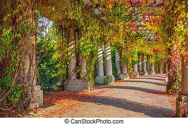 Pergola walkway in park