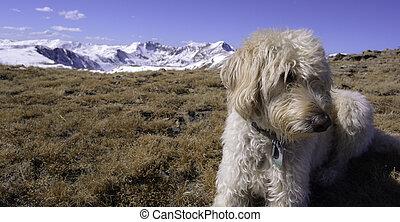 Traildog on Woods Mountain - Teig near the summit of Woods...