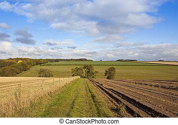 yorkshire wolds bridleway - a grassy bridleway near a...