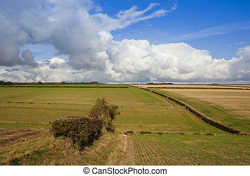 old hedgerow and hills - an old hedgerow in an agricultural...