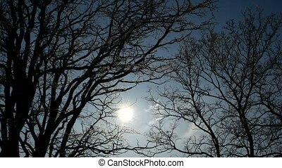 Sun shines through trees on blue sky background.