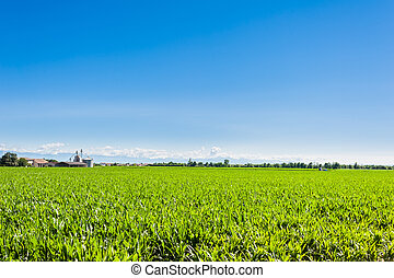 Agricultural landscape,field of mais.