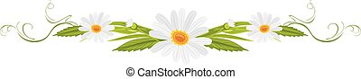 Decorative element with daisies. Vector illustration