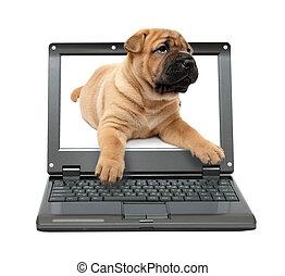 Mały,  Laptop, szczeniak, pies