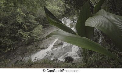 Closeup of beautiful waterfall in nature green tropical...
