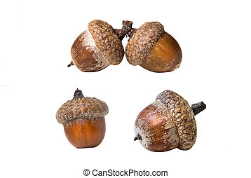 different acorns isolated on white
