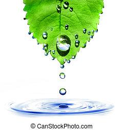 verde, hoja, agua, gotas, salpicadura, aislado, blanco