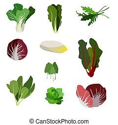 Salad ingredients. Leafy vegetables icons set. Organic and...