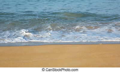 Sand crabs on the beach - Sand crabs walking on the beach,...