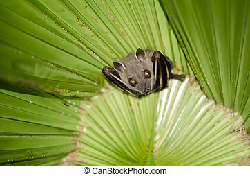 """bat is mammal and call """"vampire"""" - bat are sleeping in palm..."""
