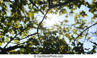Green leaves blowing by the wind in a natural park in...