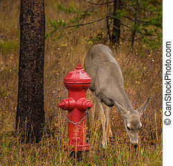 Deer near the Fire Hydrant