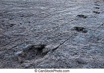 Huge dinosaur footprints, Maragua, Bolivia - Huge dinosaur...