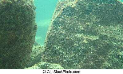 Underwater World - Sea scenery underwater in Thailand