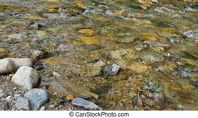 Forest creek stock footage - Clear waters of the deep forest...