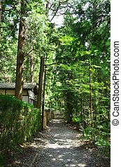 Bushy garden - Shady and bushy walk way in the garden