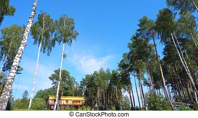 forest under blue sky timelapse - blue sky over forest...